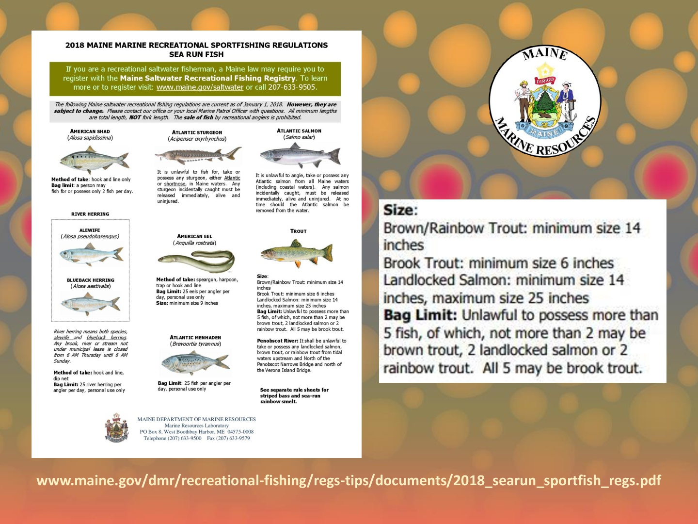 DMR-Sea-Run-Fish-Regulations-005.jpg