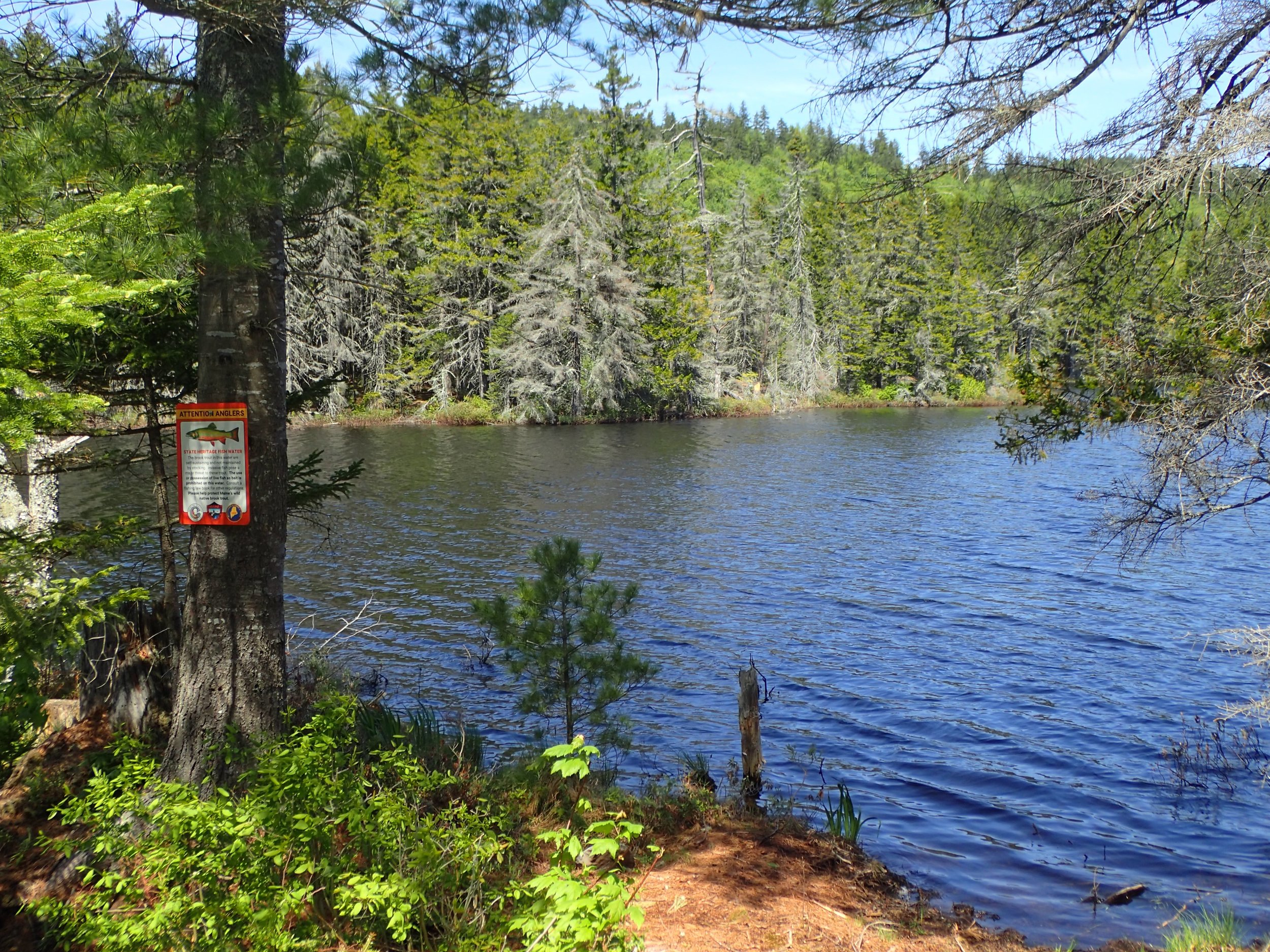 A remote State Heritage Fish pond in Somerset County, Maine.