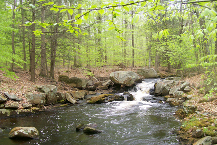 Upper Wood River, courtesy Protect Rhode Island Brook Trout