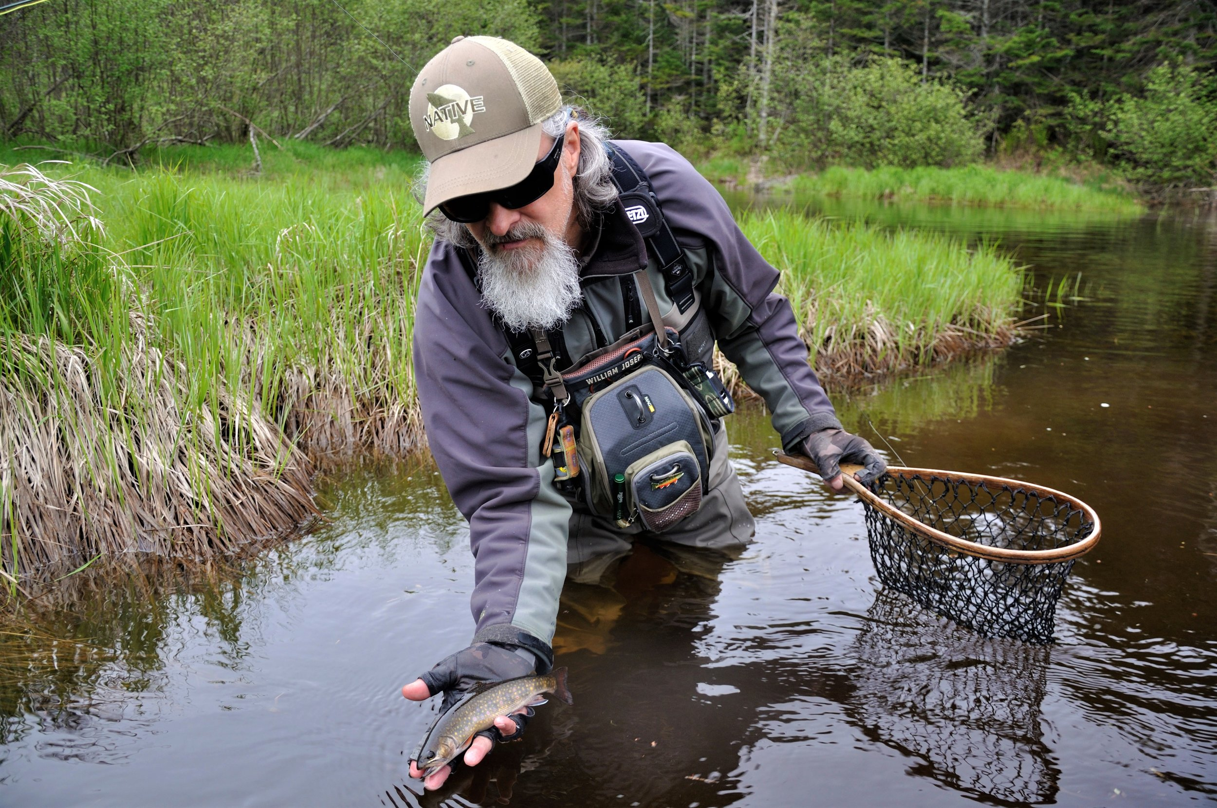 Wild native brook trout from Downeast Maine.JPG