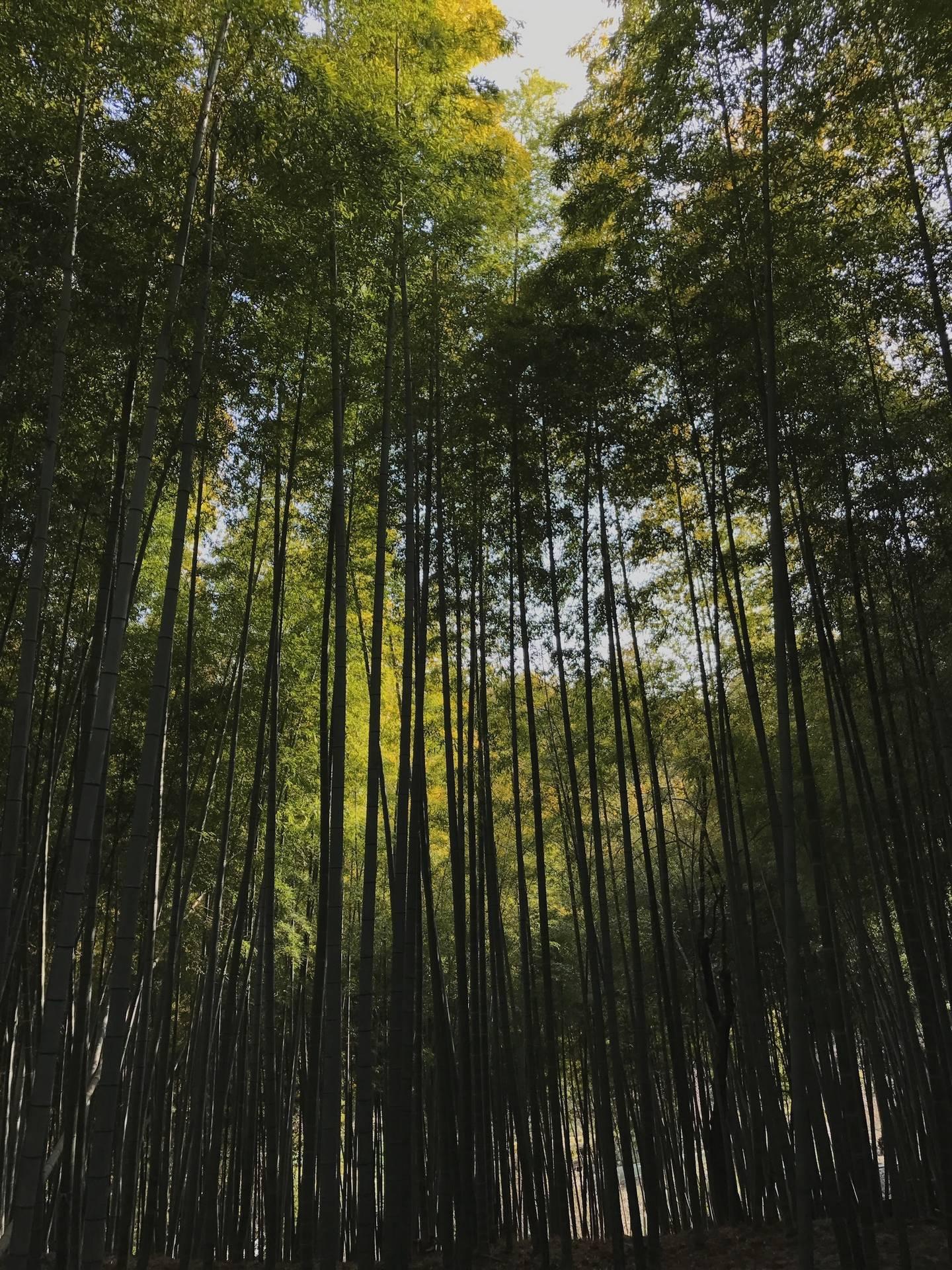 Inari03.jpg