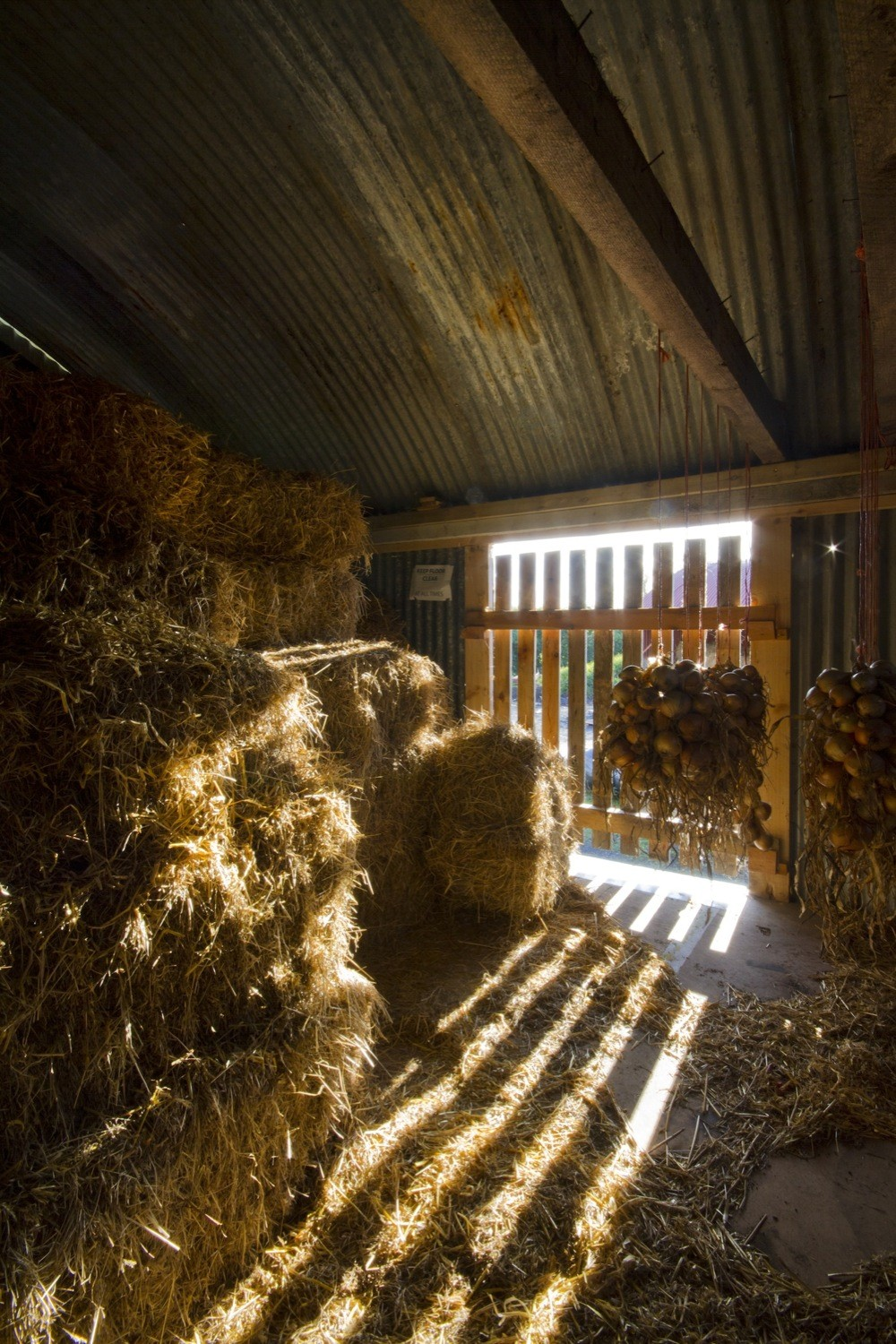 Cowshed__design_and_build_workshops_led_by_Cowshed_Collective._Image_by_Ste_Murray_(2).jpg
