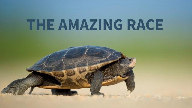Amazing Race Web Main Graphic.jpg
