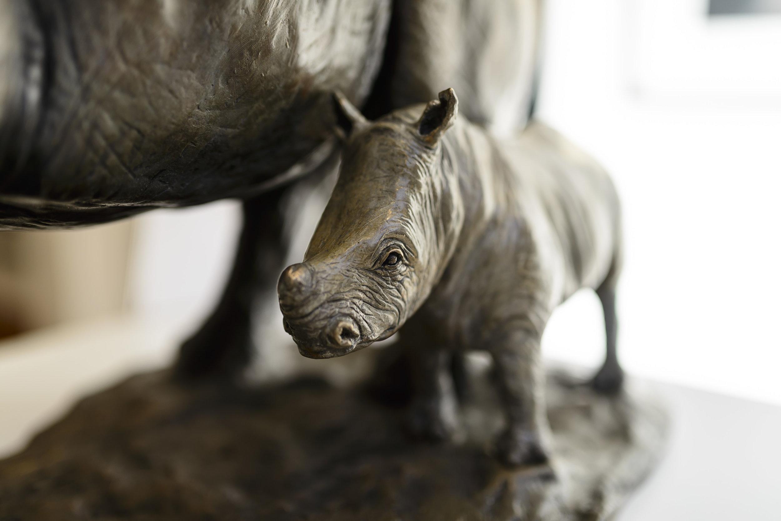 Rhino baby closeup.jpg