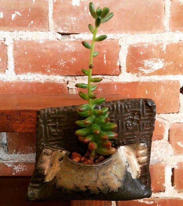 Succulent pocket.  #santacruzpottery #pottery #succulents #cacti #ceramics #sculpture #handmadepottery #santacruzca #highway1ca
