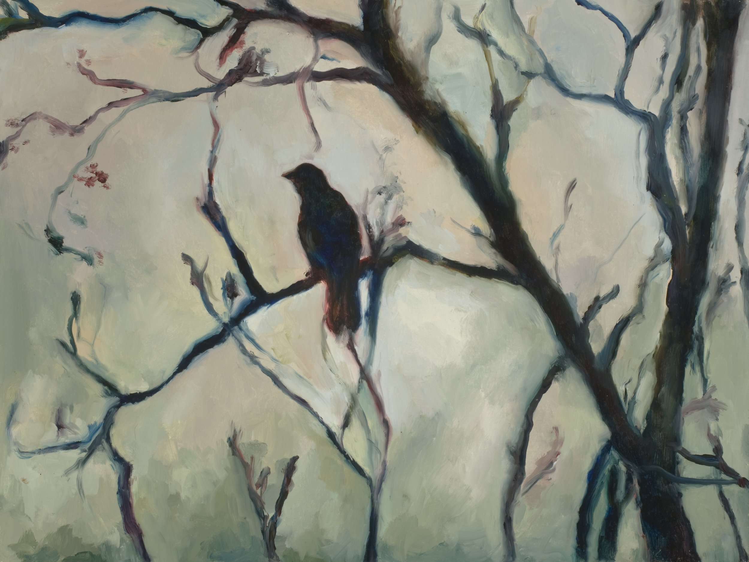 Blackbird Morning