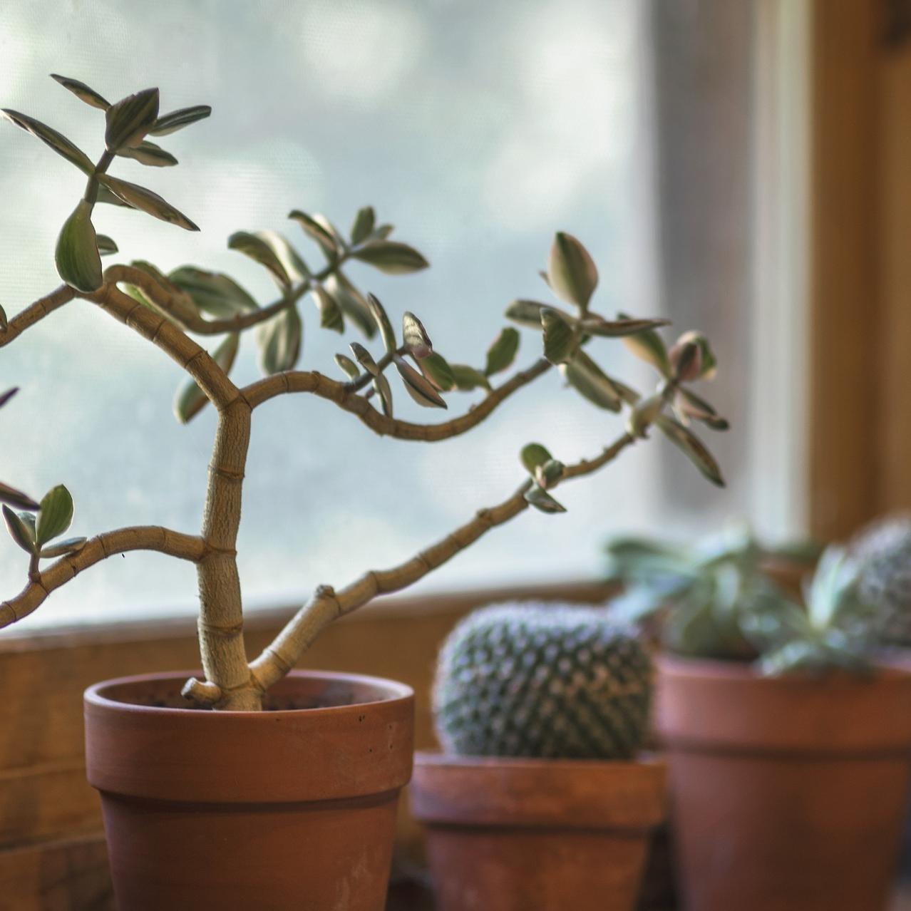 cactus-2556004_1920.jpg