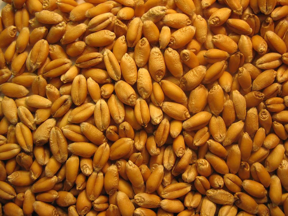 pembroke kernels.jpg