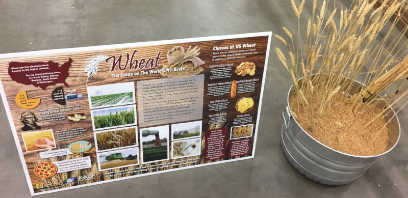 This educational wheat poster is distributed to teachers and educators by the Kentucky Agriculture and Environment in the Classroom.