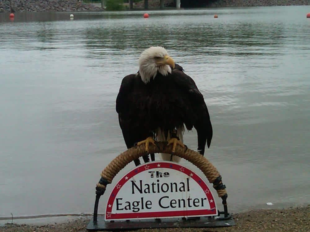Eagle on Sign.jpg