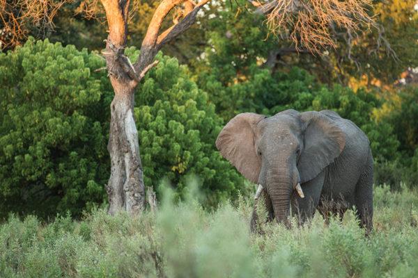 2019-great-plains-foundation-life-with-elephants-1-600x400.jpg