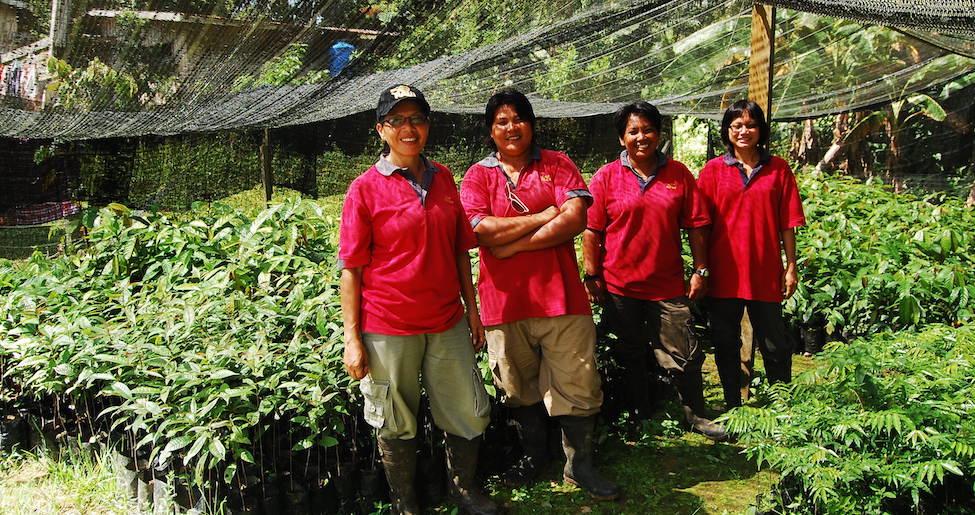 Hutan-Rsized-Banner_683_Restoration-team-in-tree-nursery-Borneo-Malaysia-©-HUTAN_Shernytta-Poloi.jpg