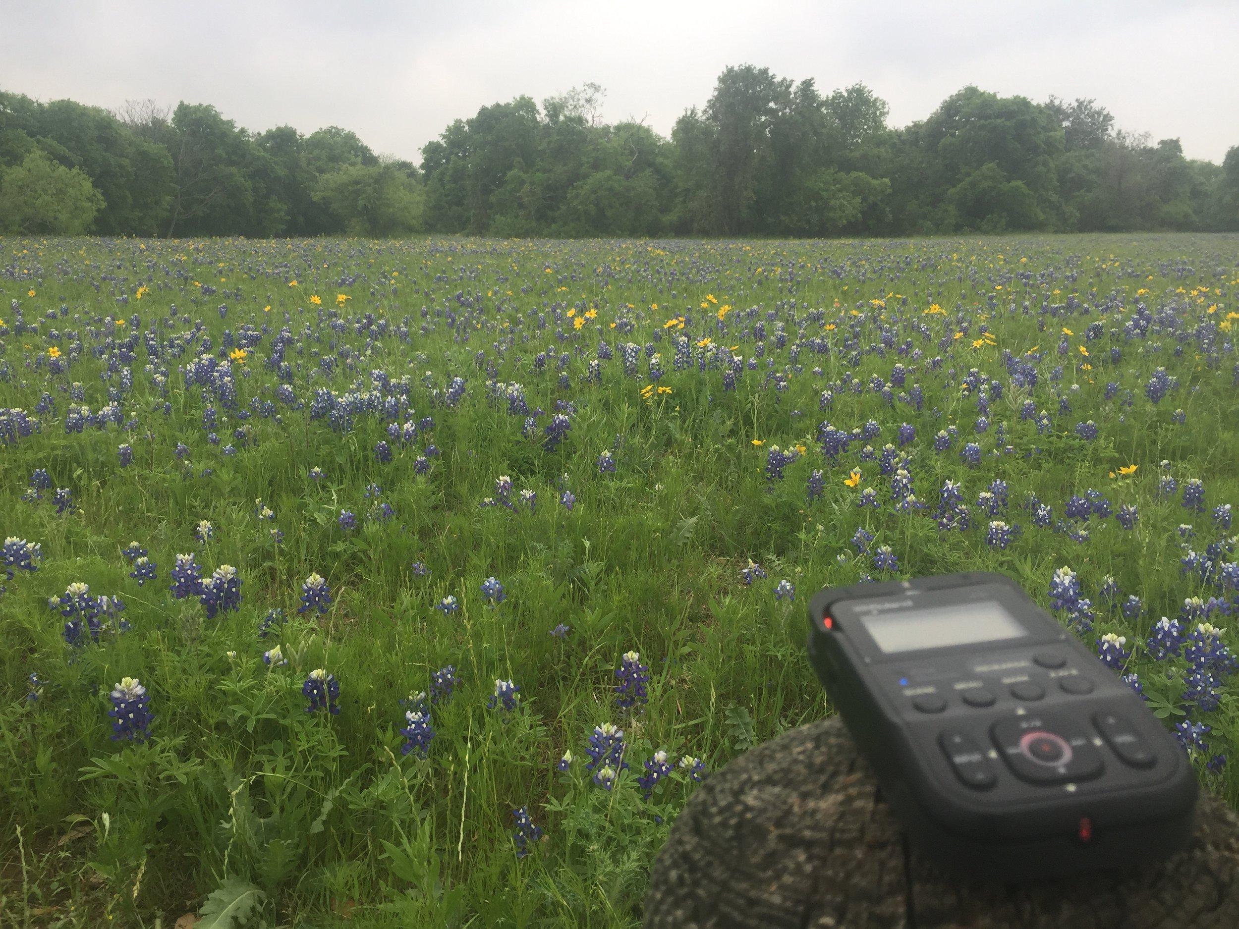 McKinney State Park, TX