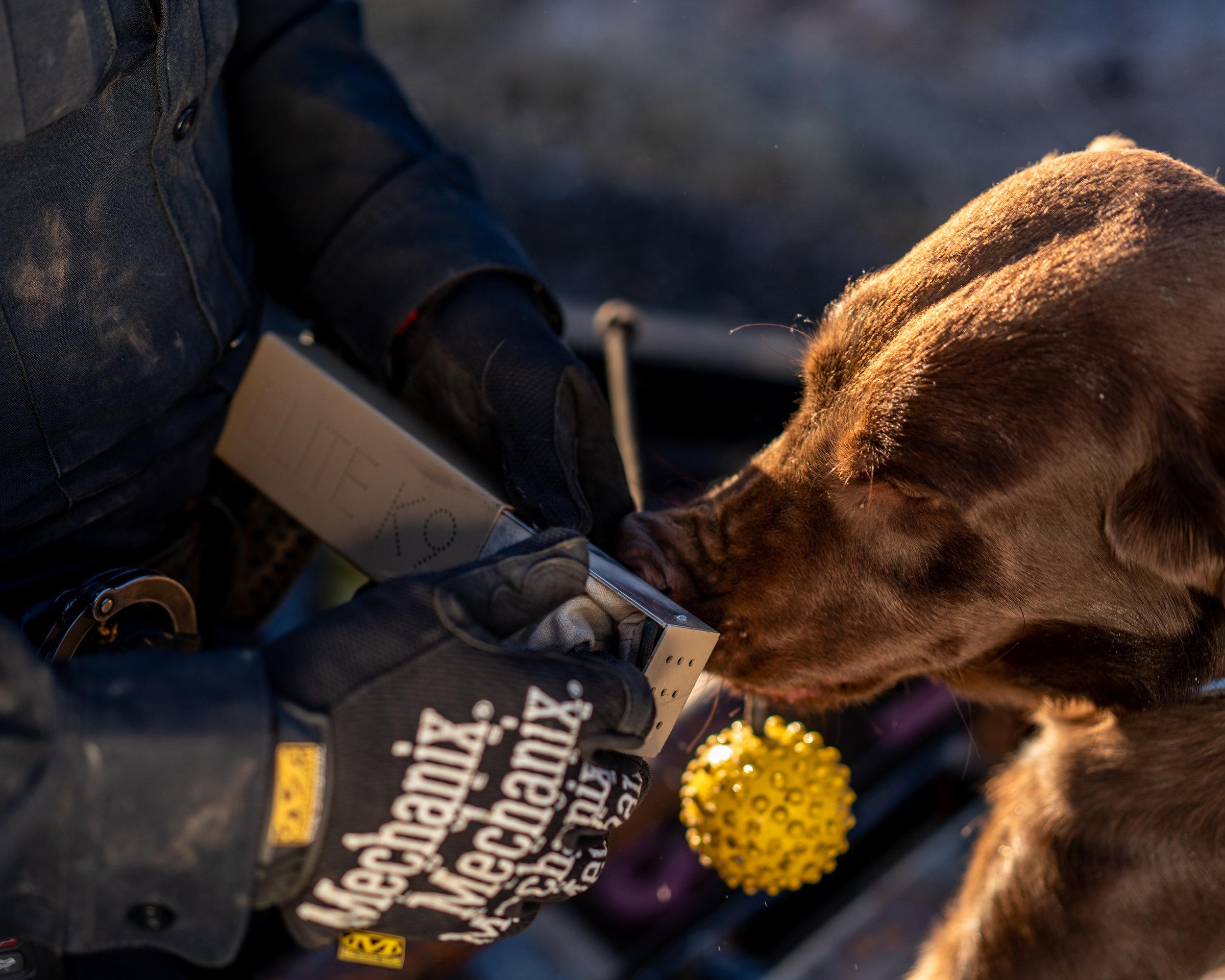 """ Marijuana Legalization Threatens These Dogs' Collars "" Role: Producer, assigning photo editor Photographer: Ryan David Brown"