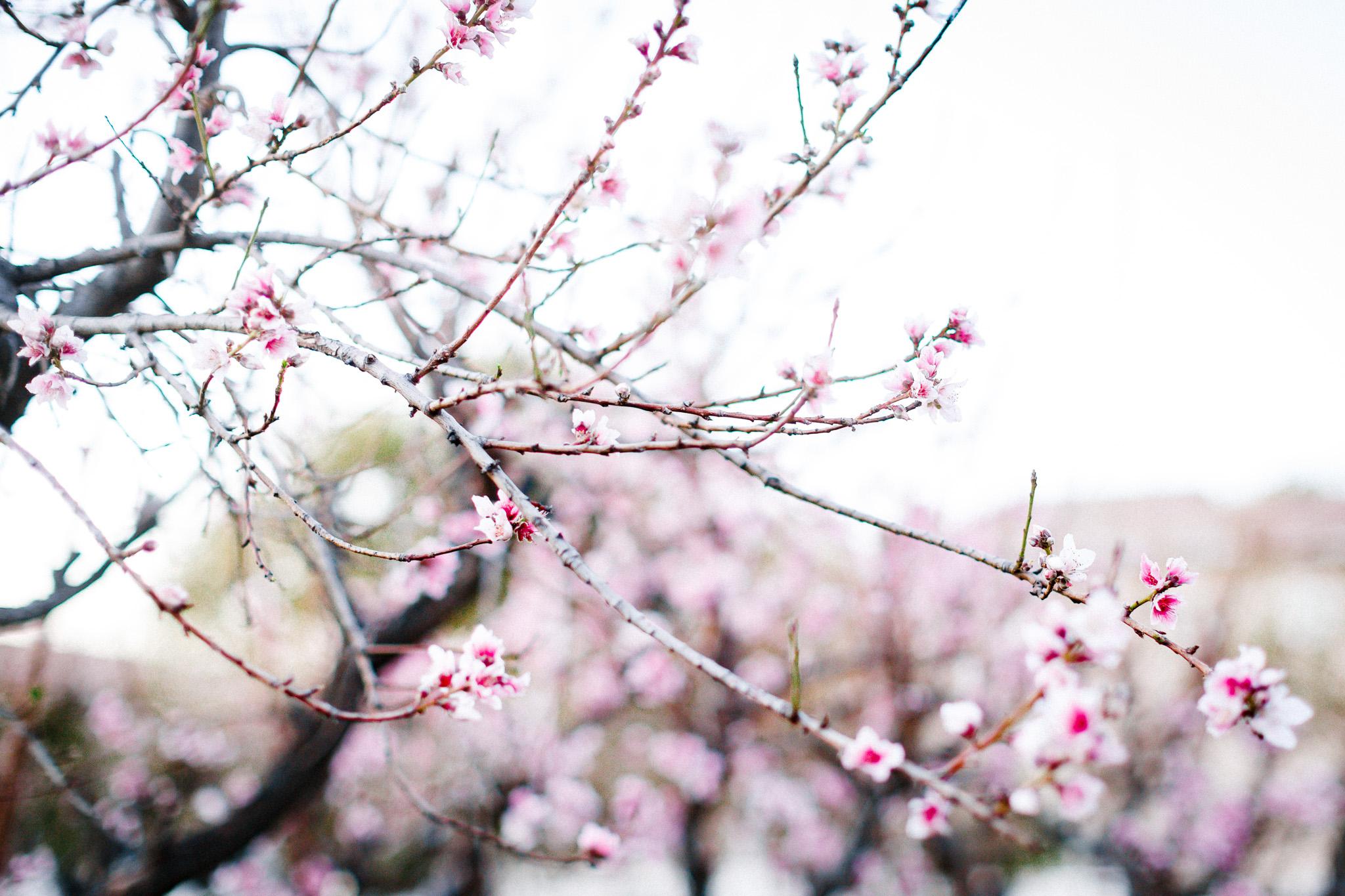 JulieGriffin-PeachBlossom1.jpg