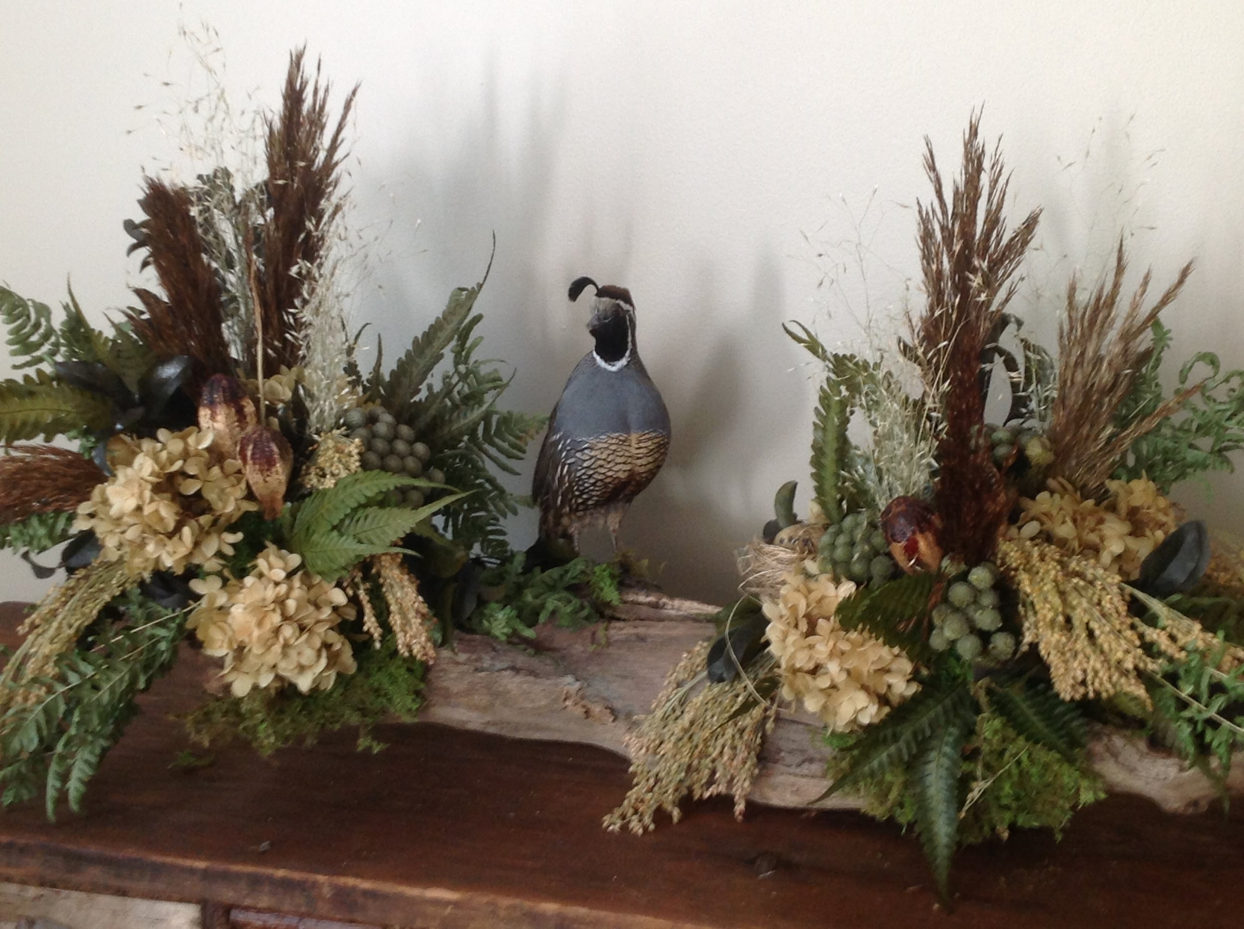 Gambrel quail on log
