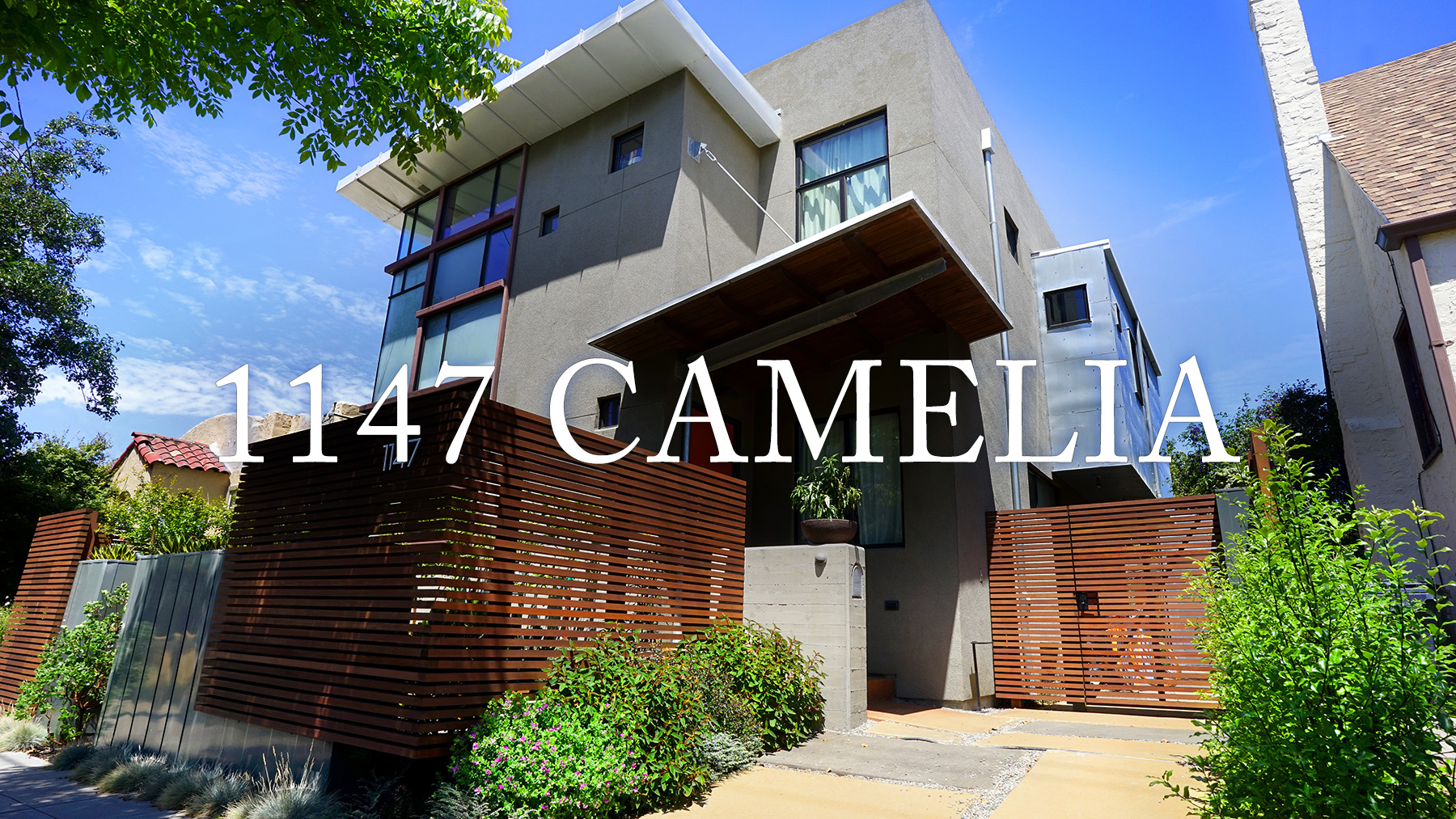 •1147 Camelia_Front_T.jpg