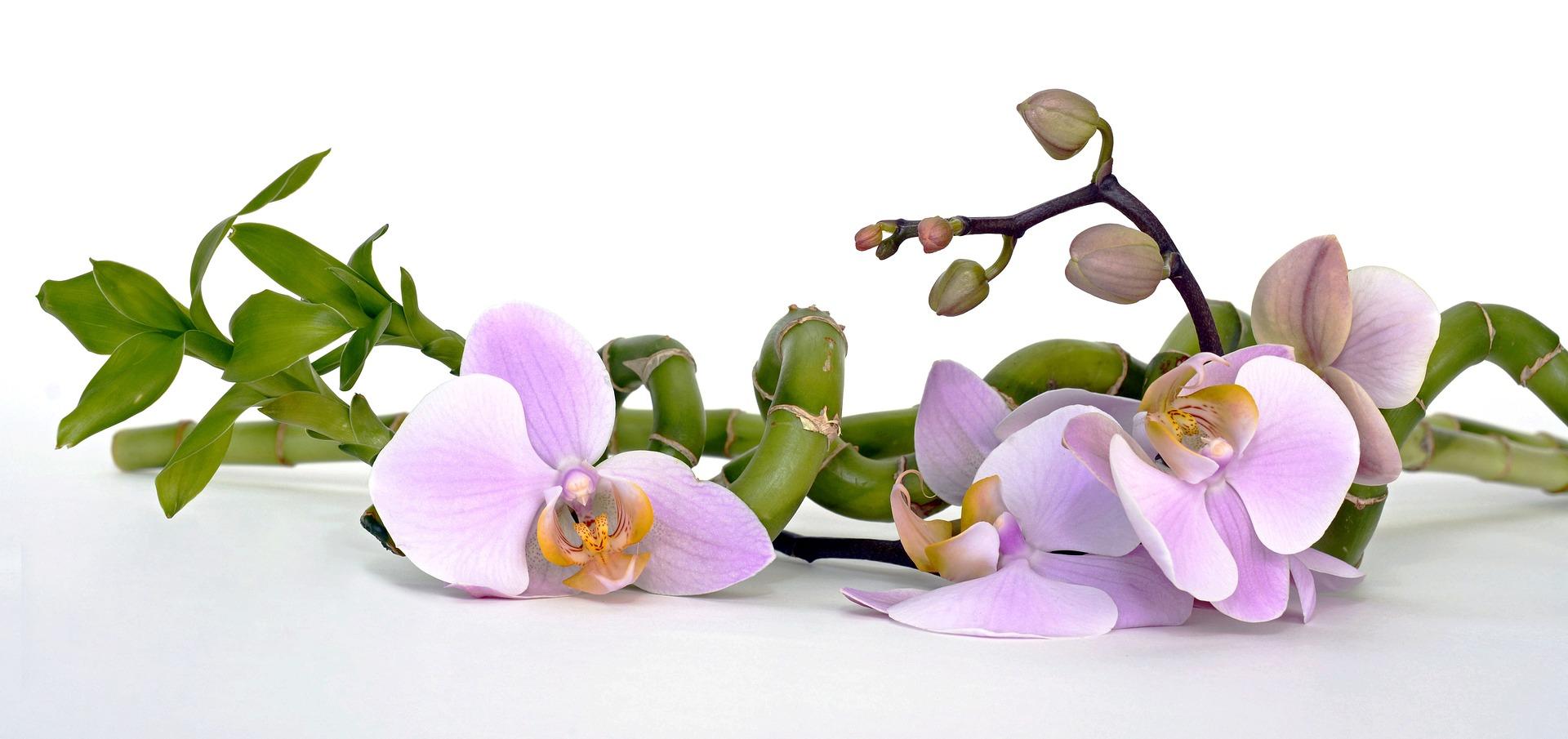 orchid-2115262_1920.jpg