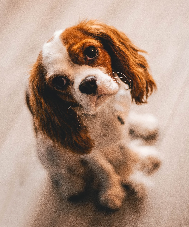 adorable-animal-canine-1390361.jpg