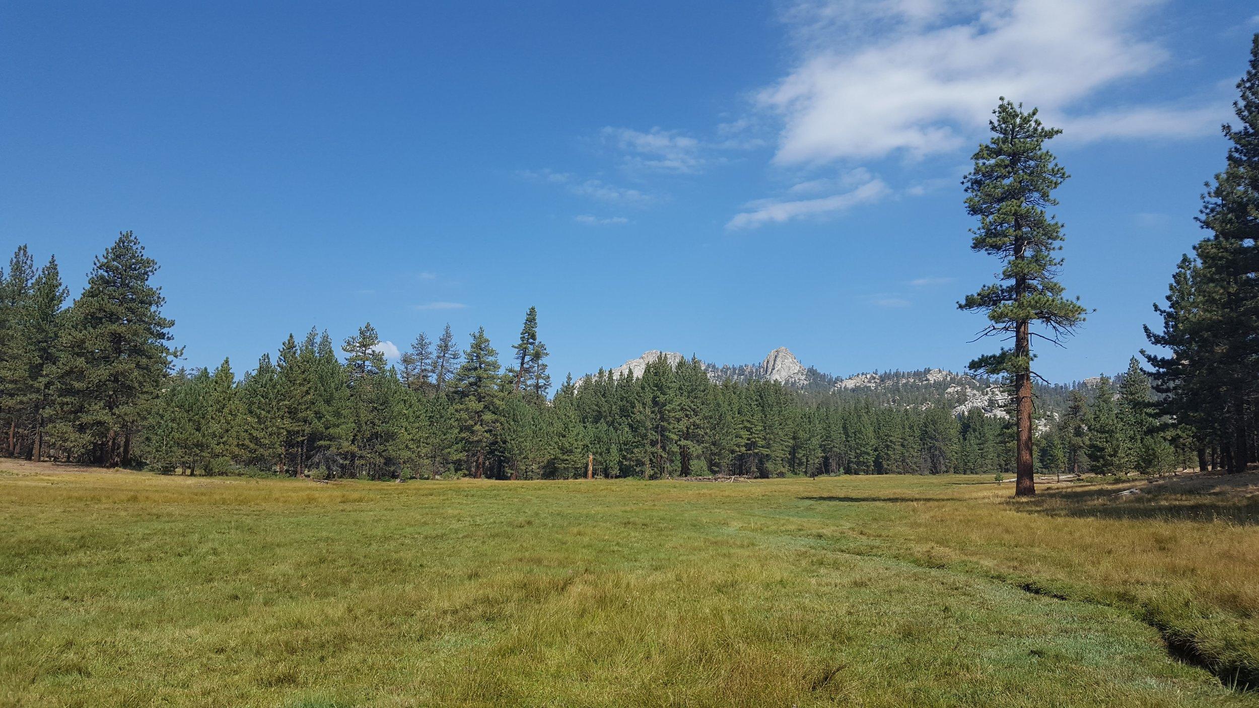Meadow Y