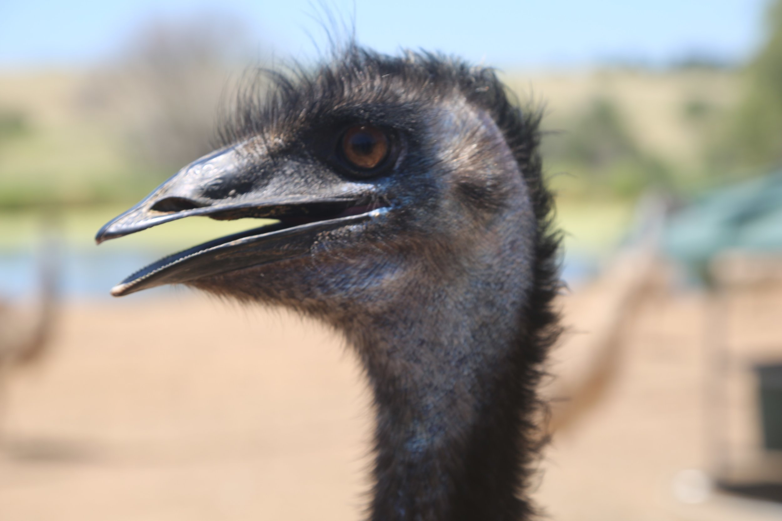 Benefits of Emu Oil -