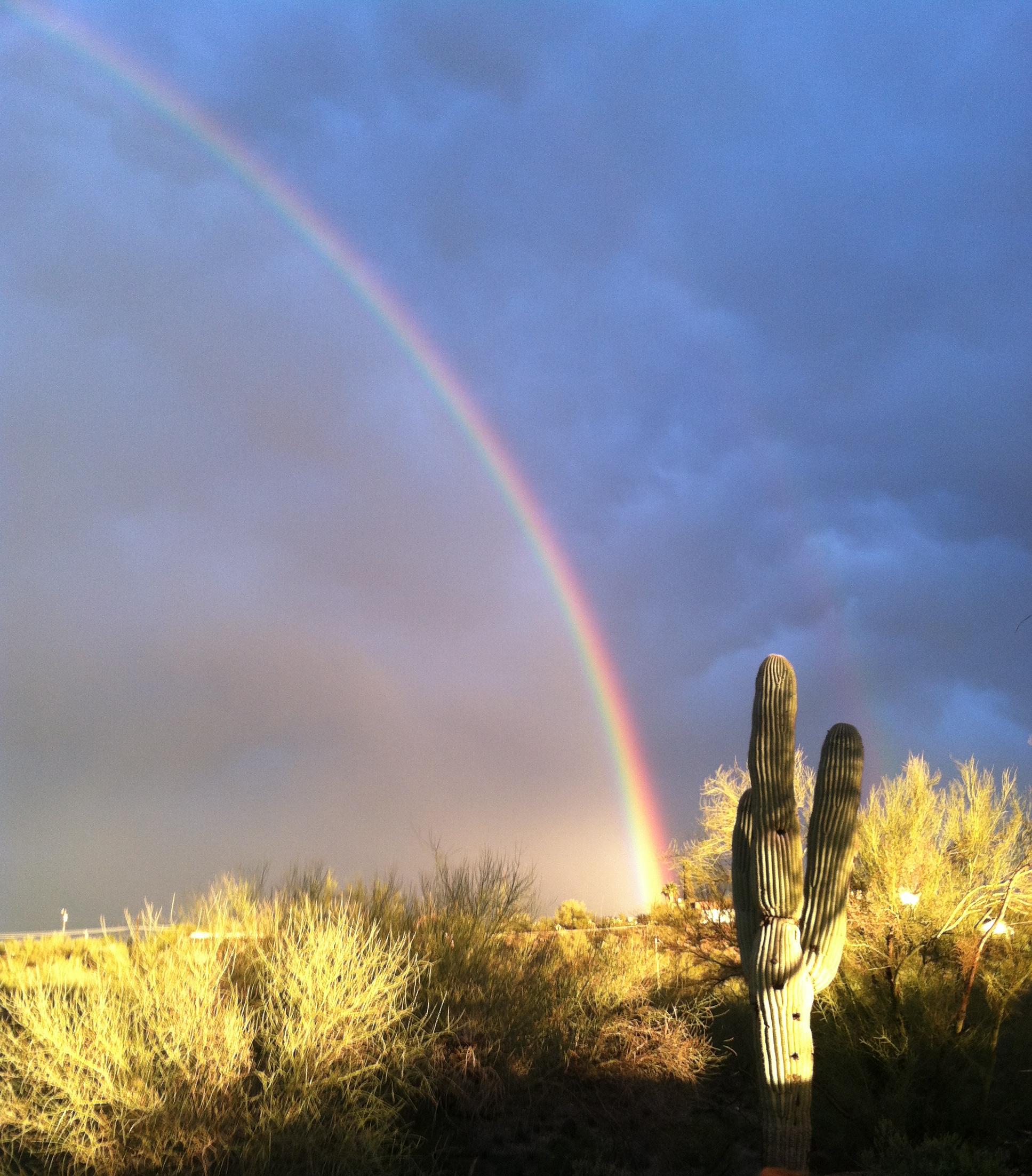 cactus rainbow full frame.JPG