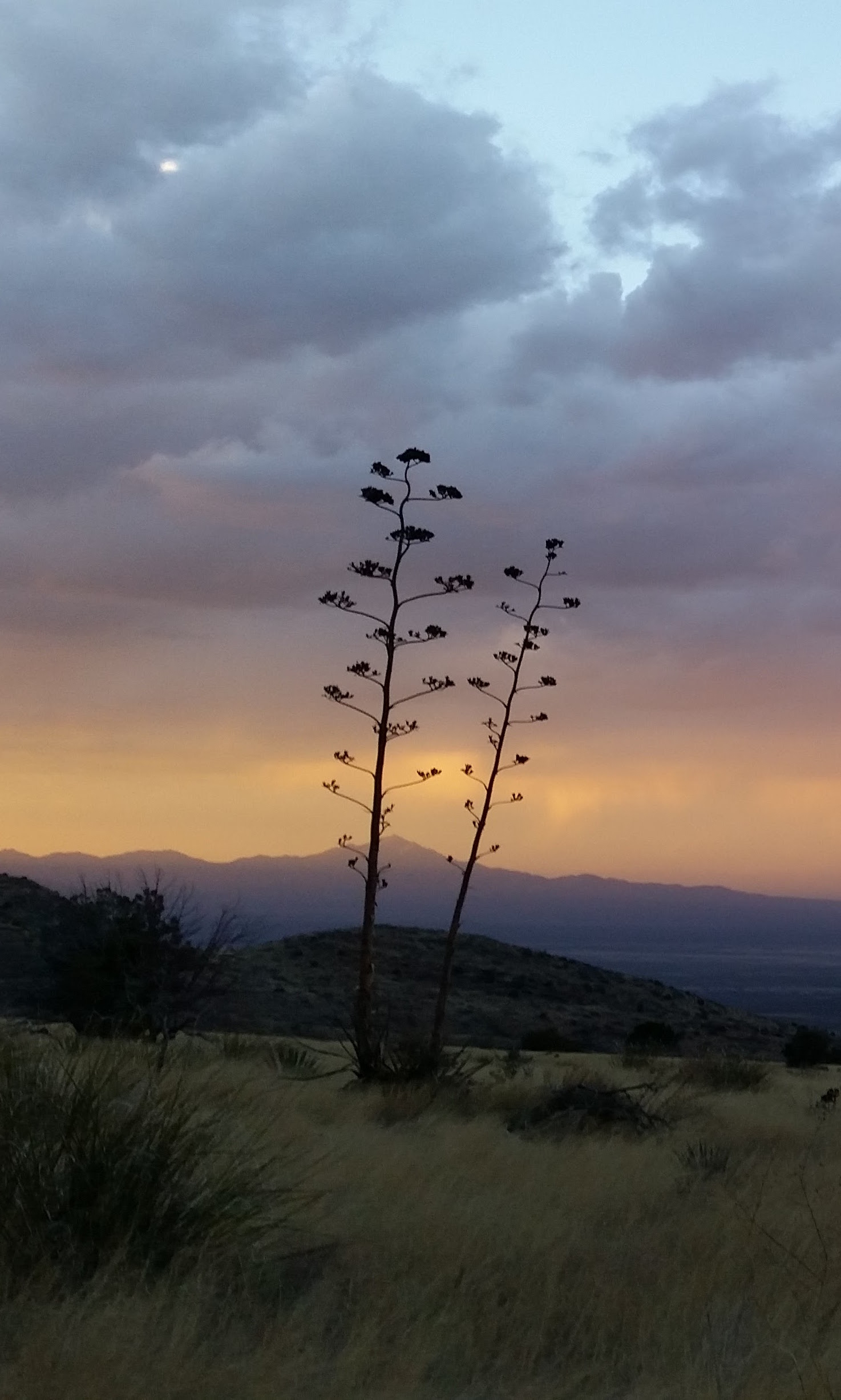Yucca and Sunset Cropped.jpg