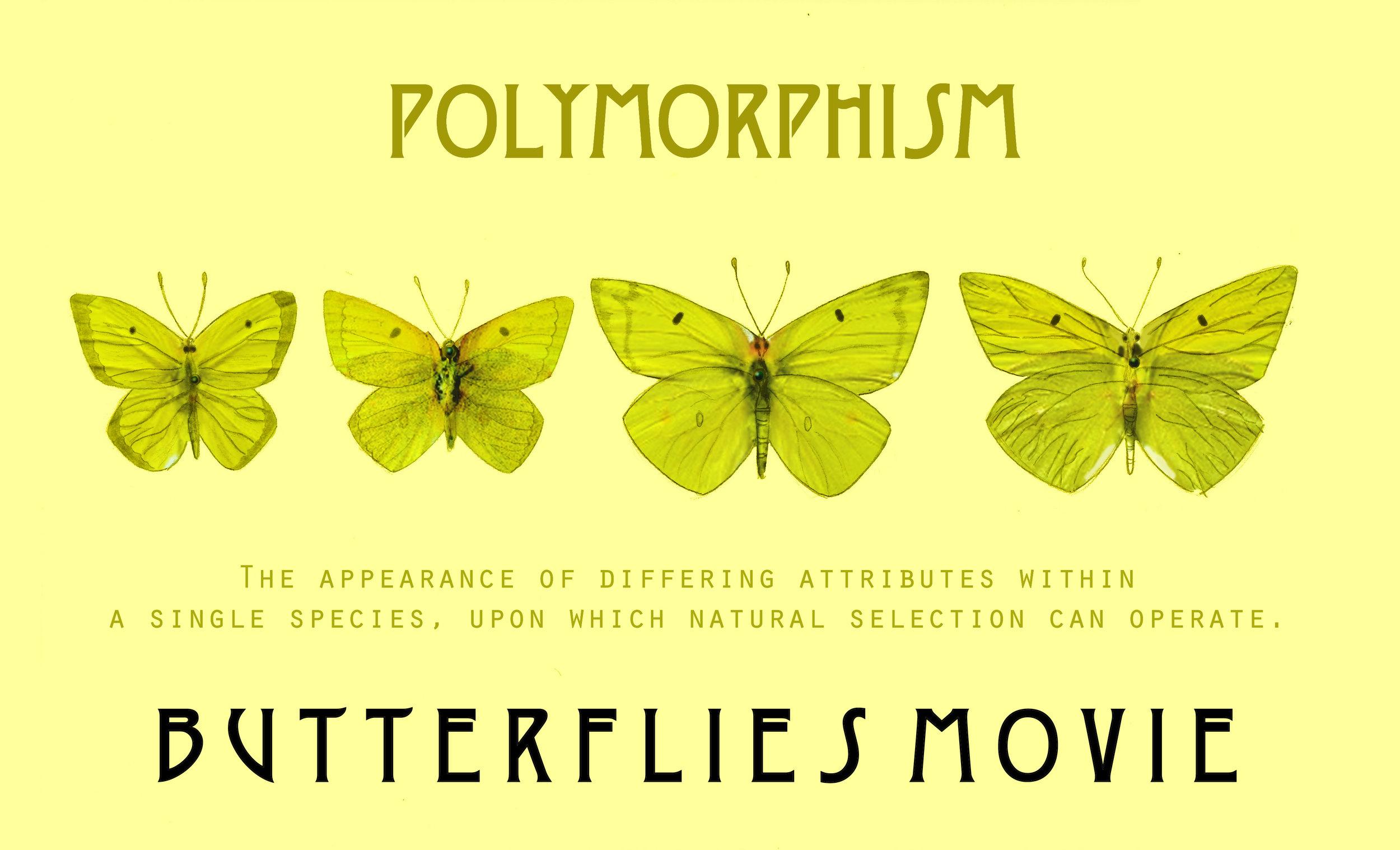 Polymorph2.jpg