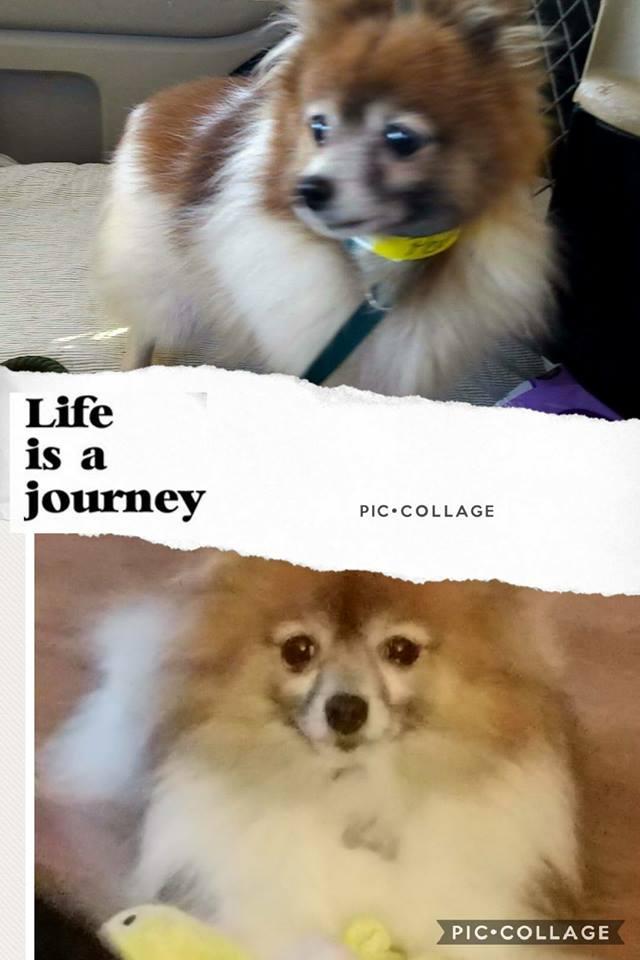 puppymill awareness day.jpg