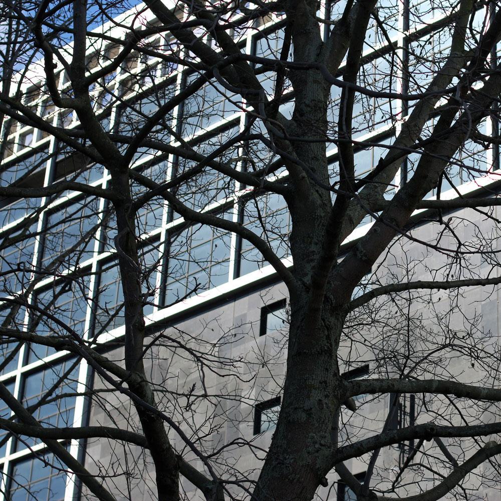 sc0000tt-tree-build.jpg