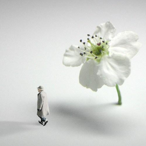 scott-austin-flower-power.jpg