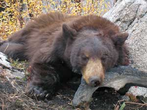 bear-hunt-4.jpg