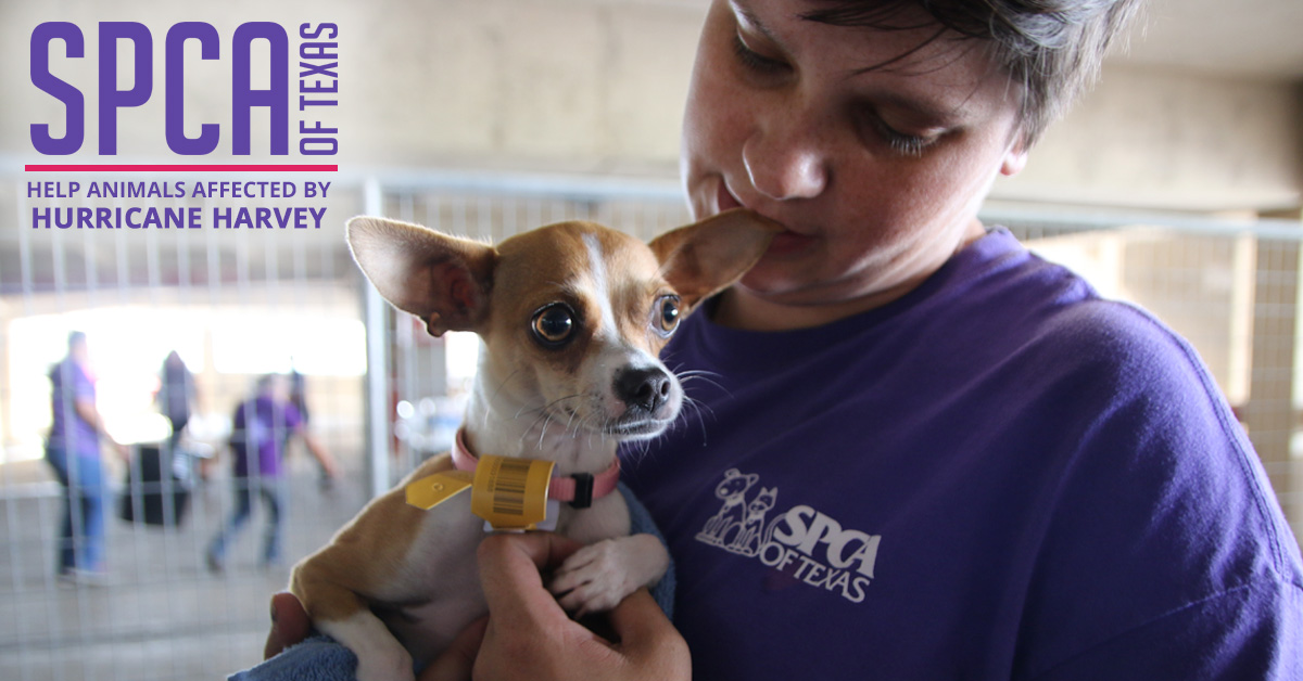 Lolo's Donates to SPCA of Texas for pets affected by Hurricane Harvey