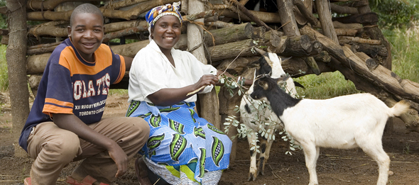 Heifer International is an organization we give to all year long! Just throw your change into our piggy bank at the register at Lolo's. With your help we are able to purchase animals for those in need. Giving an animal is like giving someone a small business, providing wool, milk, eggs and more.