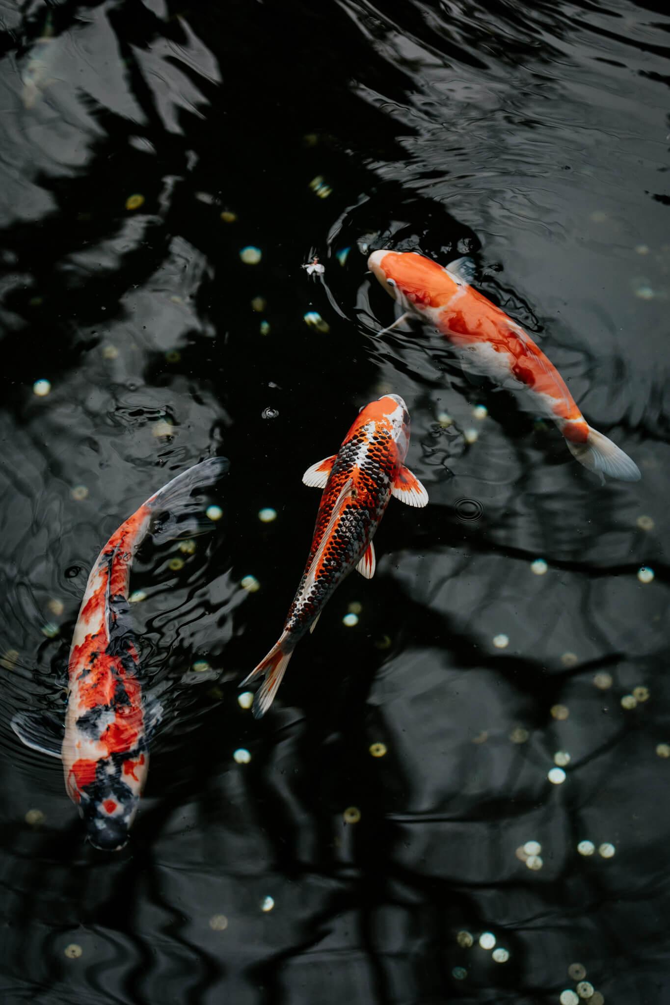 Japan-Travel-Photography-Natalie-Skoric-3.jpg