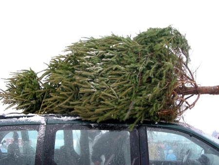 christmas-tree-car.jpg