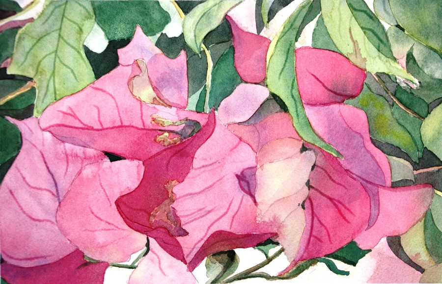 """BOUGANVILLEA, Watercolour, 10"""" x 7"""""""