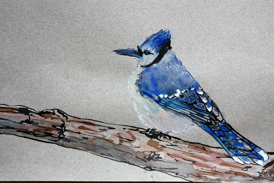 "Cape Breton Blue Jay, Watercolour, 7"" x 5"" SOLD"