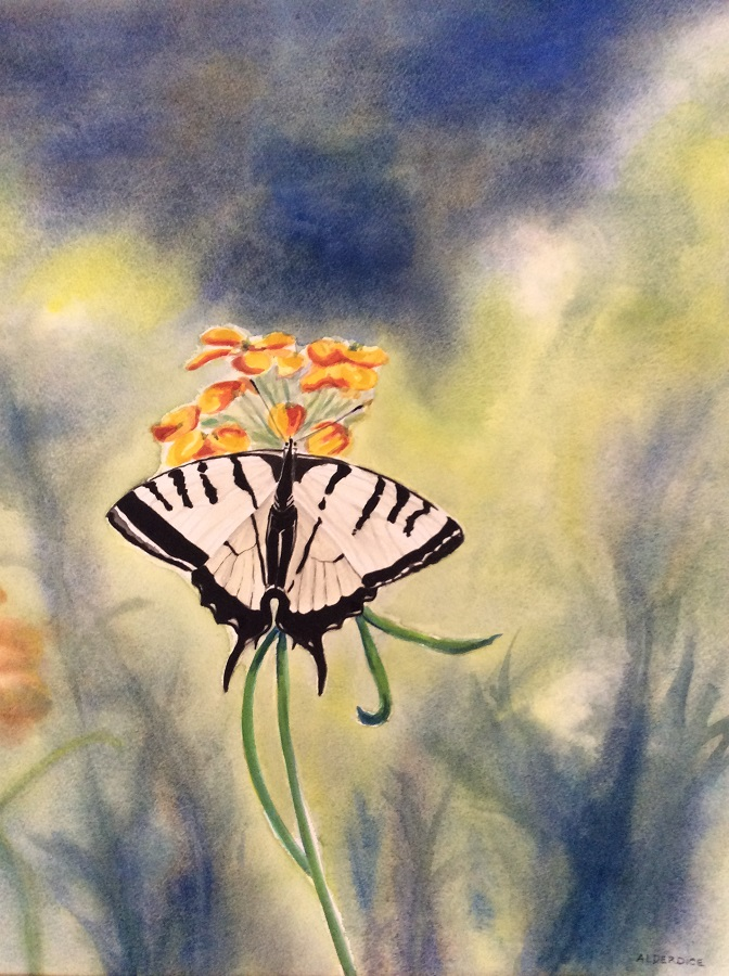 """SWALLOWTAIL BUTTERFLY, Watercolour, 18"""" x 12"""" SOLD"""