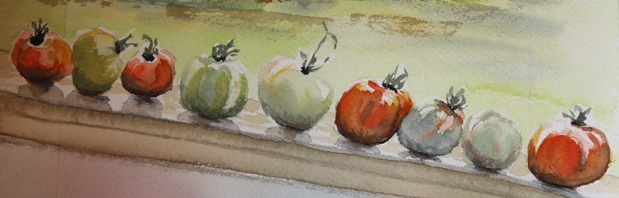"""BIG HILL TOMATOES, Watercolour sketch, 8"""" x 3"""" sold"""