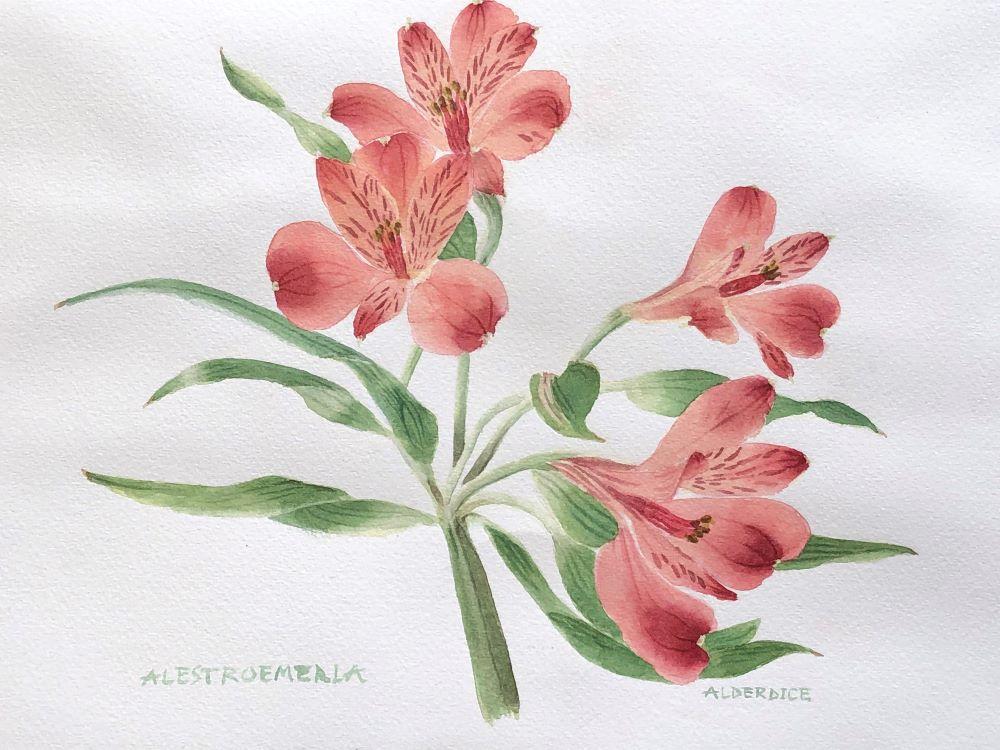 """Alestromeria 14"""" x 11"""" Watercolour"""