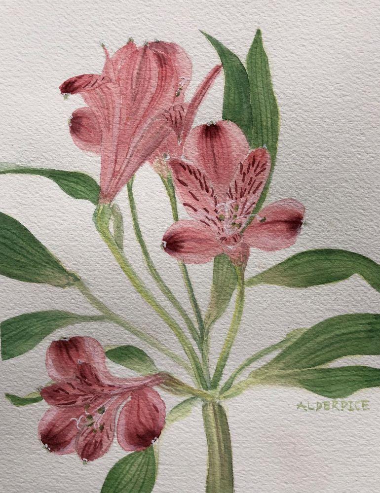 """Alestromeria #2 Watercolour 9"""" x 7.5"""""""