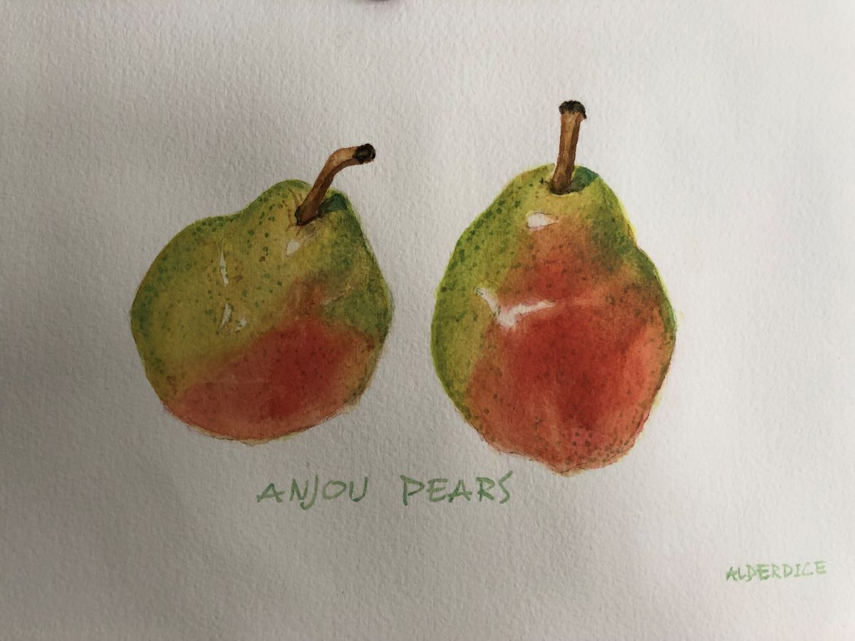 "Anjour Pears 11"" x 7"" Watercolour"