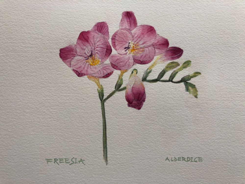 """Freesia 12"""" x 9"""" Watercolour"""