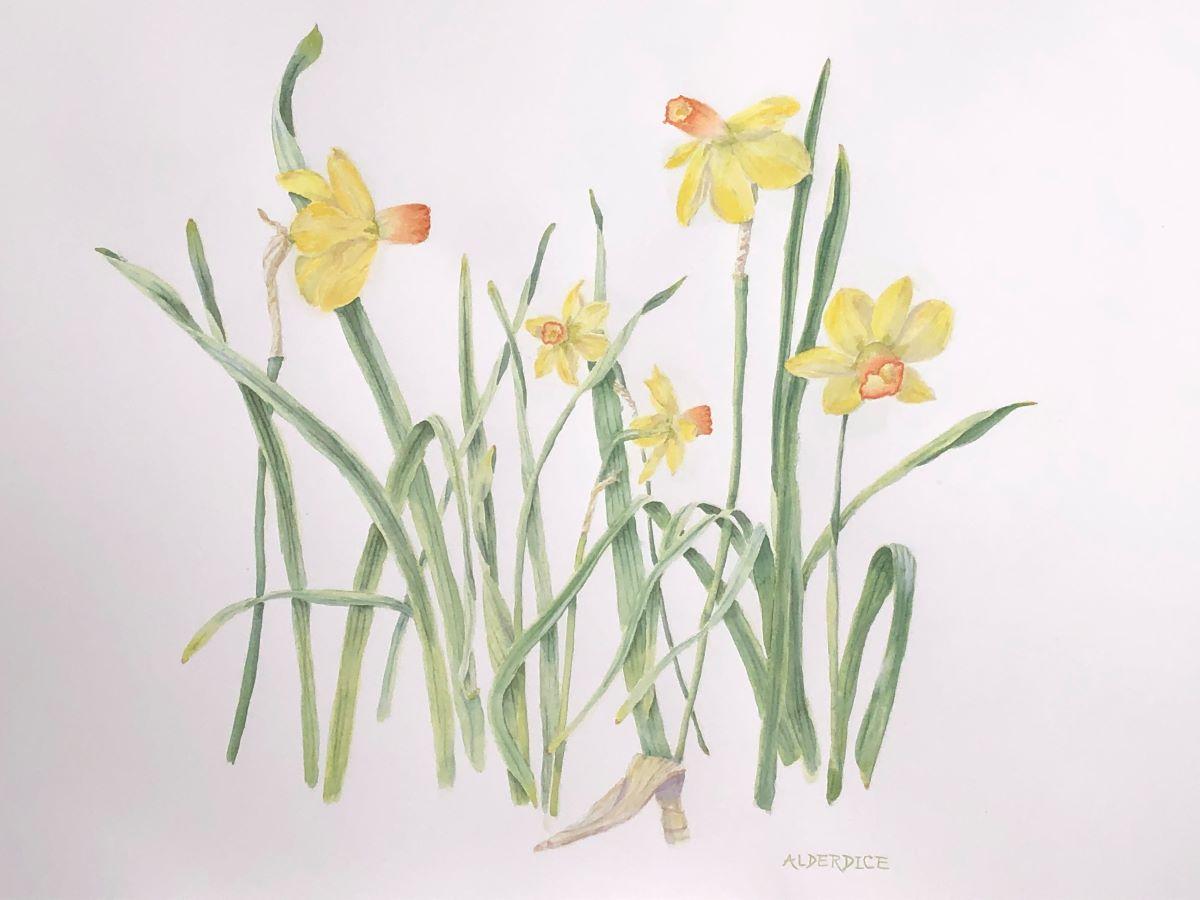 "Daffodils 20"" x 24"" Watercolour"