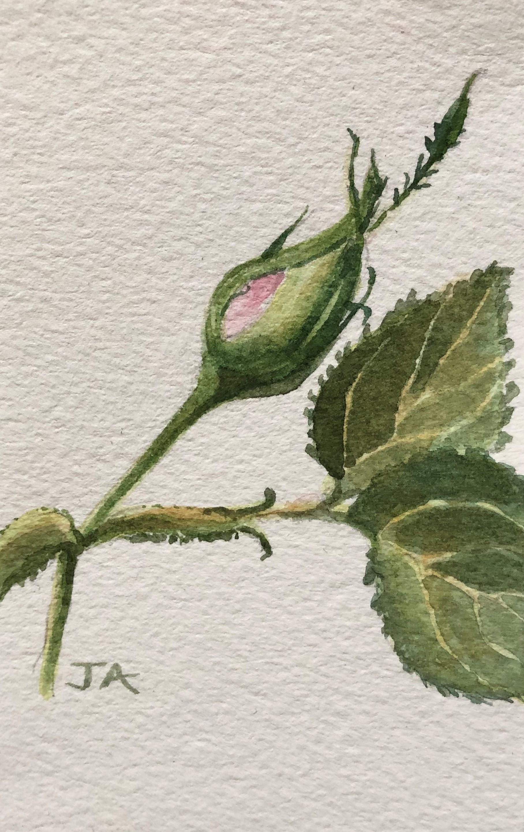 Rosebud5 (2).JPG