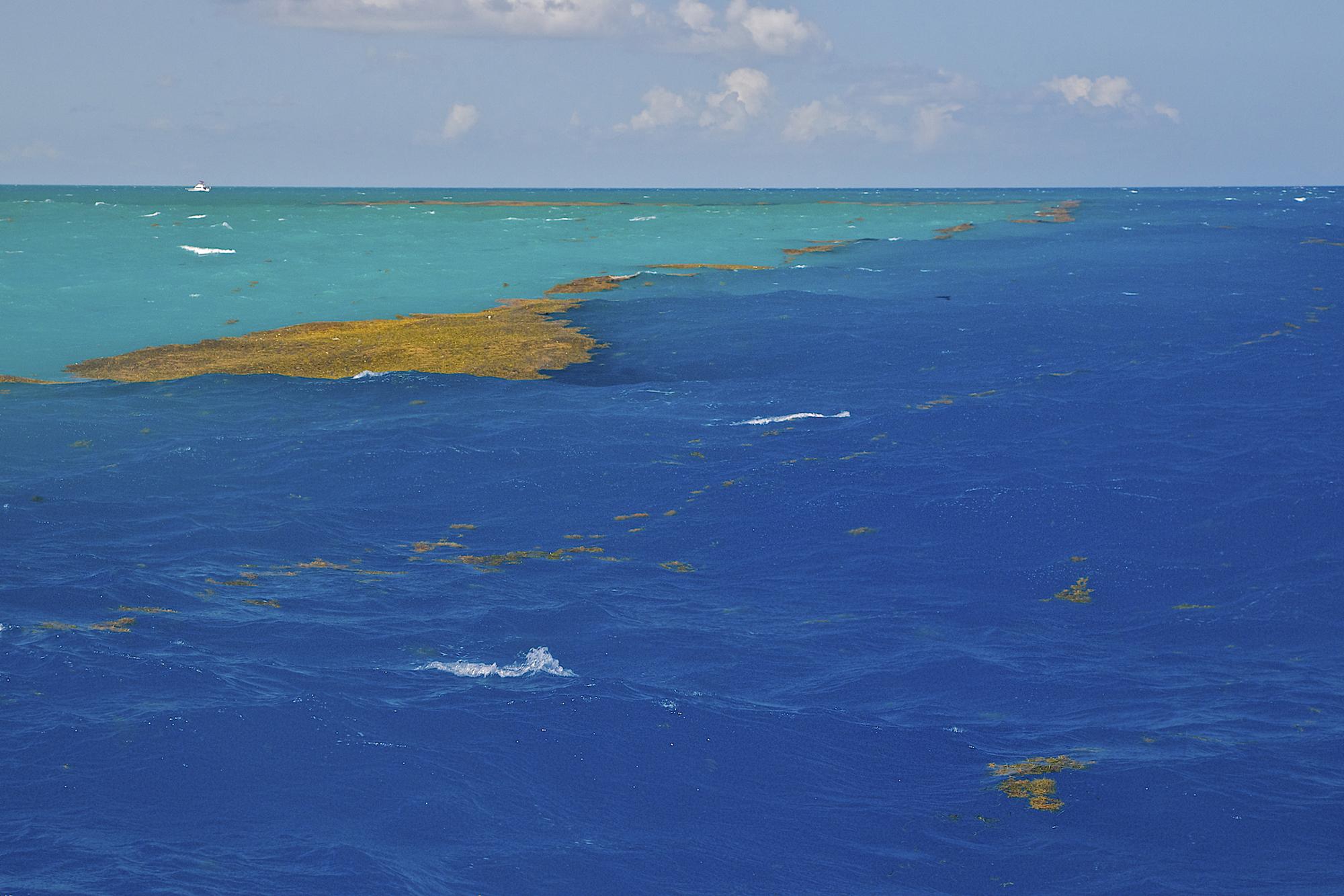 saragososeagulfstreamwaterfla.jpg
