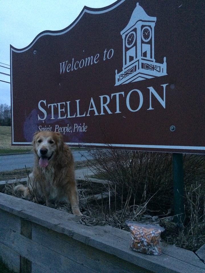 Stellarton3.jpg