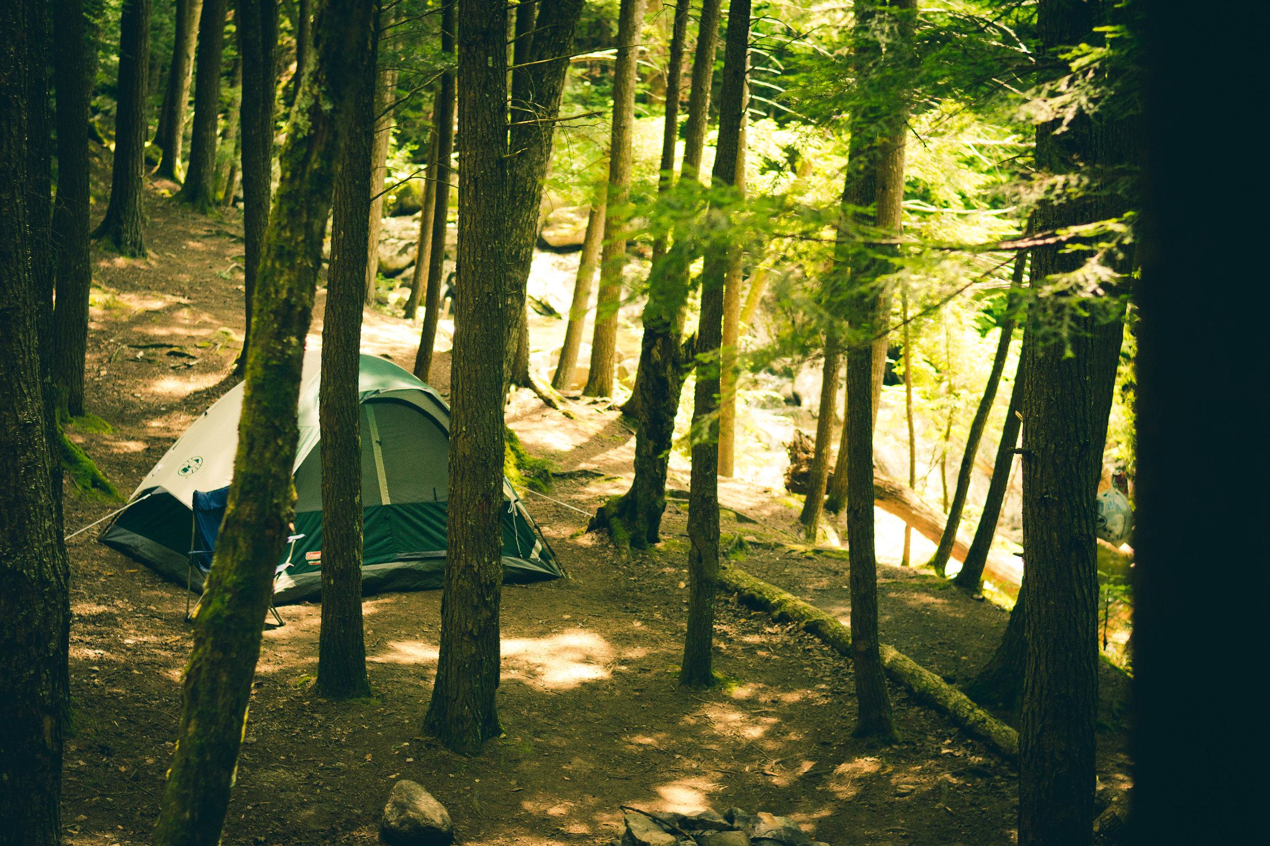 light-forest-trees-morning.jpg