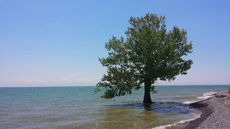 It doesn't look polluted right? Most of the beaches we clean don't look too bad, but we always find lots to pick up! This photo was taken in Prince Edward County by Jessie Black during Love Your Lake 2017.